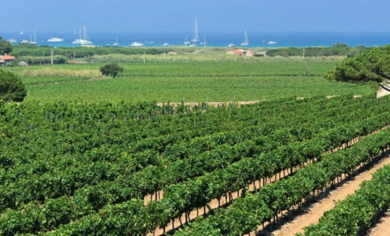 De Saint-Tropez à Ramatuelle, les vignobles en fête